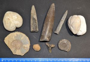 An interesting and great value group of 9 x large Fossils, Ex Old UK collection (Lot 3) SOLD